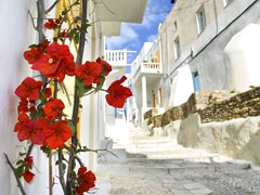 11_Flowers-on-a-Mykonos-street,-Greece