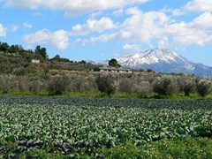 03_cabbage-field-with-a-snow-capped-mountain-in-the-background-on-the-island-of-evia-in-greece